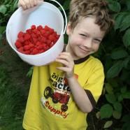 Berry Happy
